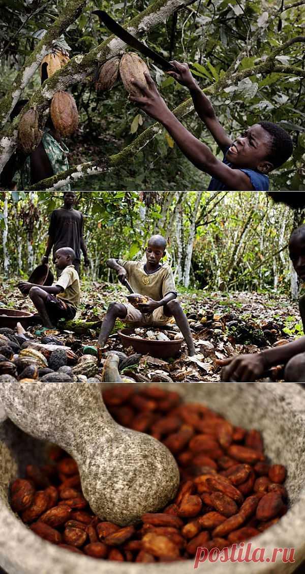 (+1) сообщ - Факты из мира шоколада | БУДЬ В ФОРМЕ!