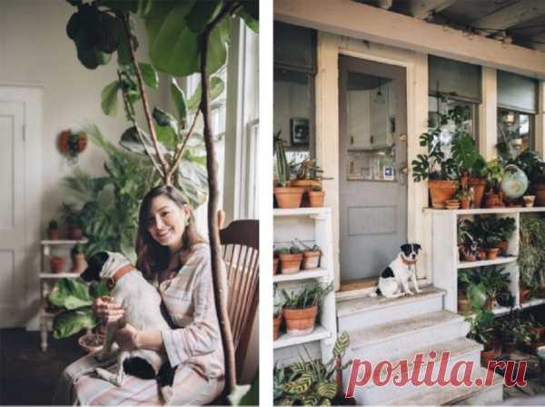 Котики и фикусы: как подружить домашних питомцев и растения? | Папамамам — МИФ