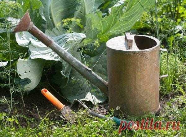 Особенности полива различных видов овощей