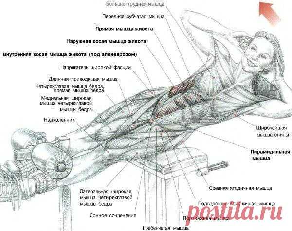 ПРЕСС. Боковые подъемы туловища на римском стуле. Основная нагрузка ложится на косую и прямую мышцы живота. Так же в этом упражнении  задействована квадратная мышца поясницы