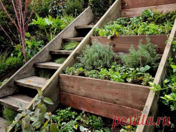 The idea for a garden — is more than spicy herbs