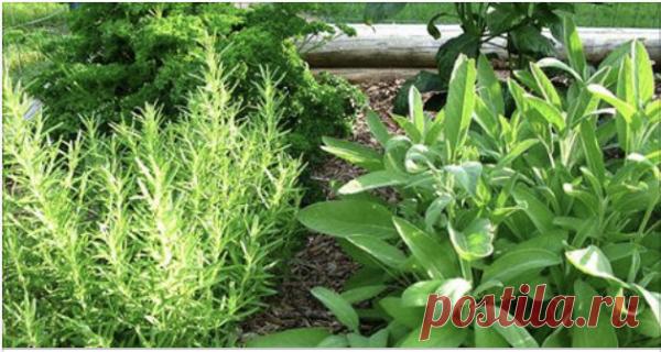 Врачи утверждают, что хрящи бедра и коленей восстанавливаются за неделю с использованием этих трав! — Копилочка полезных советов