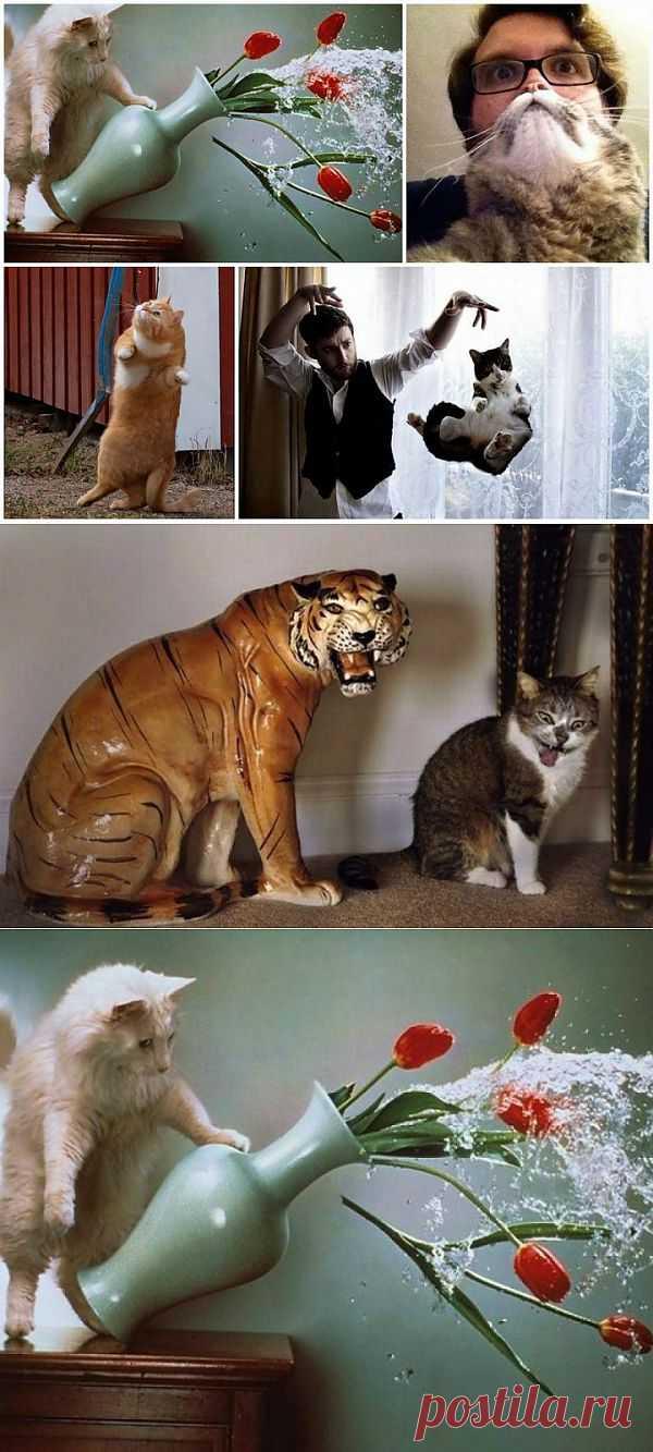 (+1) - Удачно пойманные кадры с кошками | ПРИКОЛЫ