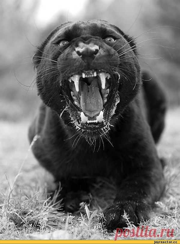 Черная кошечка...