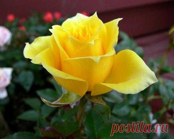 Розы: http://kolobok23.ru/post280080642