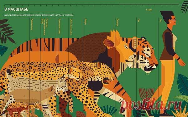 El libro es escrito con el amor grande a felino y el mundo de la naturaleza.