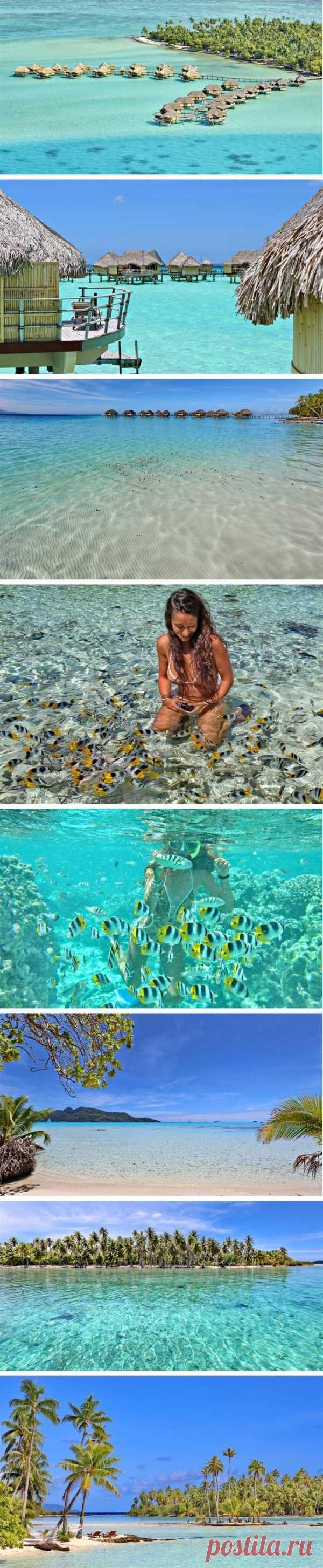 Там, где всегда лето. Остров ванили, Французская Полинезия