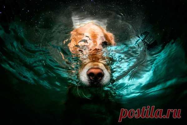 Сет Кастил (Seth Casteel) - фотограф из Лос-Анджелеса, сделал очень необычную серию фотоснимков, которая стала невероятно популярной среди интернет-пользователей. Сет произвёл подводную съемку собак, играющих в мяч в бассейне.