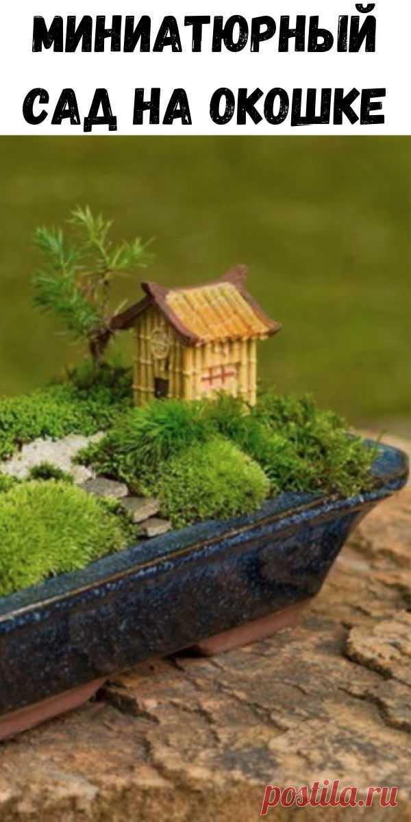 Миниатюрный сад на окошке - Полезные советы красоты