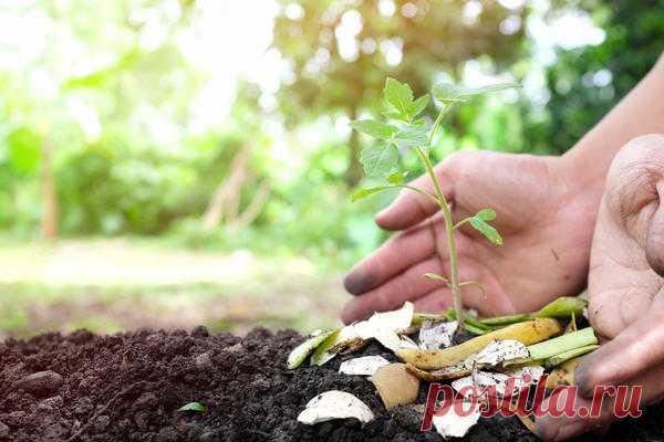 Удобрения из кухонных отходов: как приготовить и применять