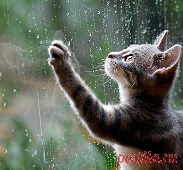 Котёнок ловит капли дождя