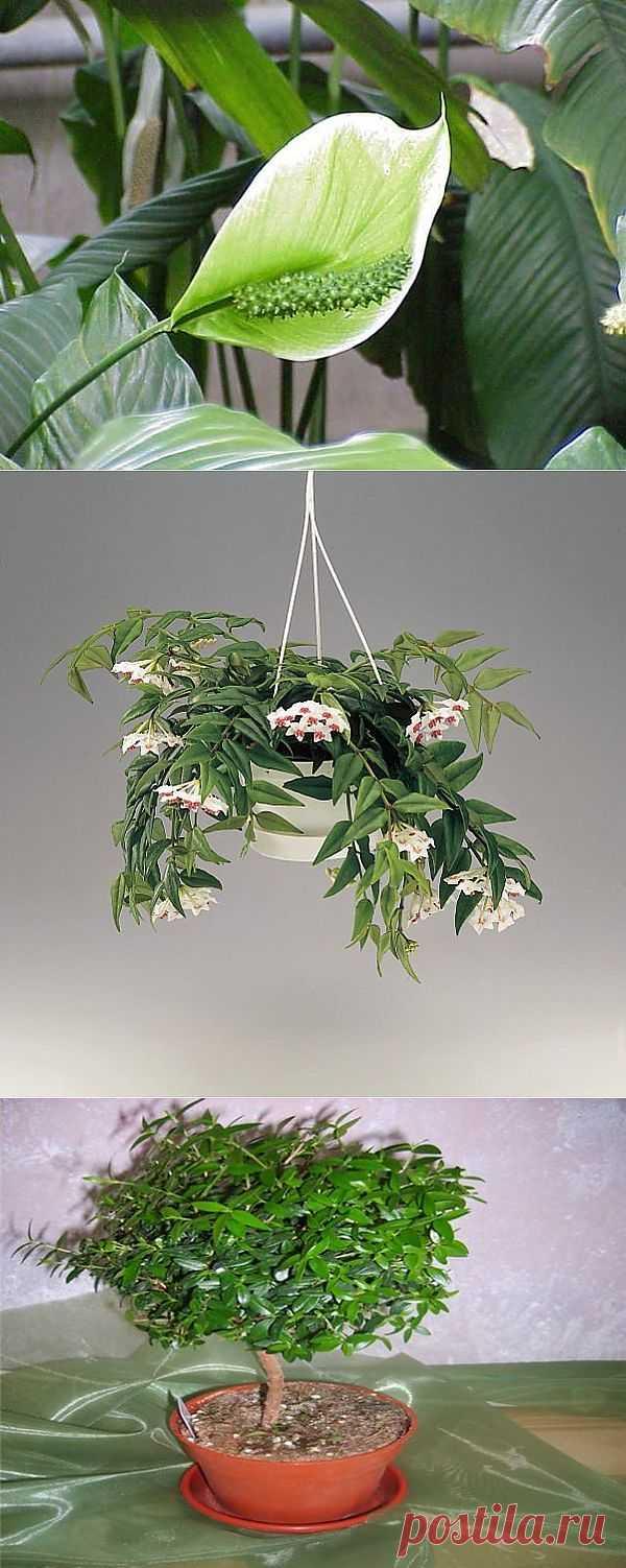 Растения, приносящие в Ваш дом Любовь!