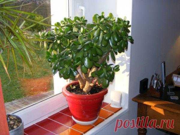 ТОП-10 комнатных растений для лентяйки - Комнатные растения - уход за комнатными растениями - Дом - IVONA - bigmir)net - IVONA - bigmir)net