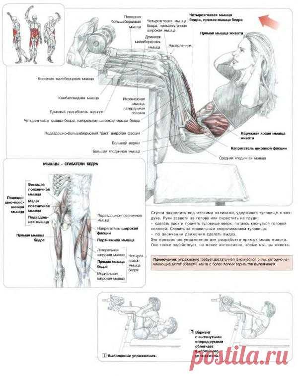 ПРЕСС. Подъемы туловища на вертикальной скамье. Данное упражнение является достаточно эффективным для проработки прямых мышц живота. Вместе с тем оно задействует, но уже в меньшей мере косые мышцы живота.