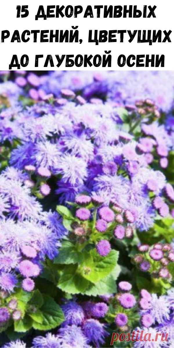 15 декоративных растений, цветущих до глубокой осени - Советы на каждый день