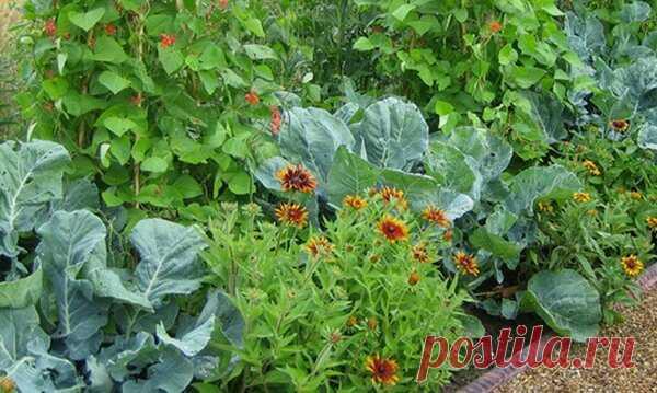 Модный огород. Что вырастить в огороде для красоты и пользы | Блоги о даче, рецептах, рыбалке