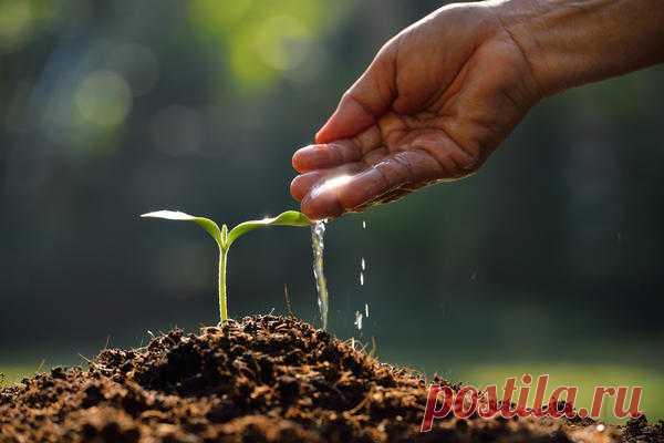 Стимуляторы роста растений: правильное применение