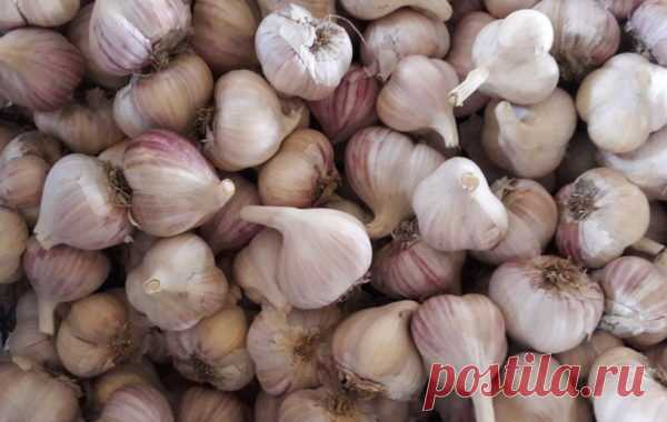 Garlic does not dry, does not screw up the face if it is correct to store it... This way of storage of onions and garlic proved as the most sensible! I check many years. How at you houses are stored vegetables? If to reflect, the economy of your means depends on right storage of products. The same onions and garlic can be stored not 3 months, and twice longer if to know a secret!