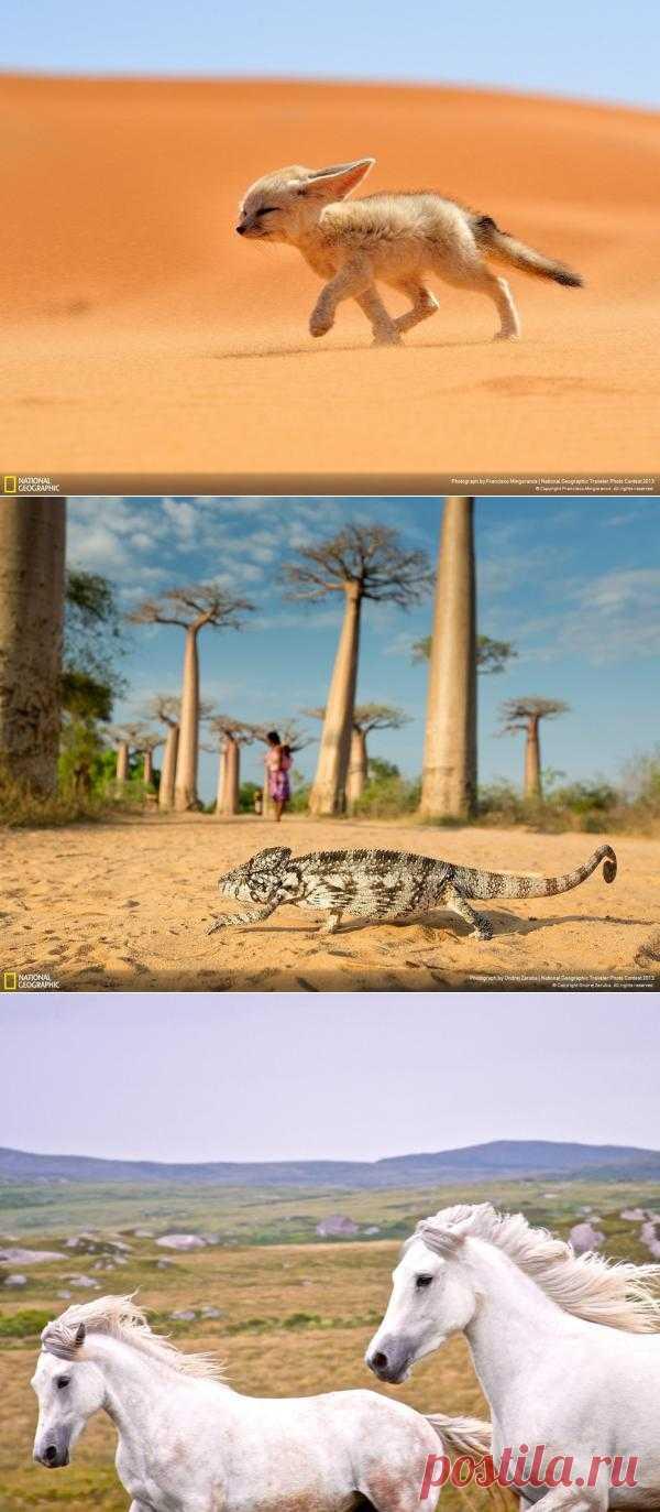 35 лучших фото животных на фотоконкурсе National Geographic Traveler : НОВОСТИ В ФОТОГРАФИЯХ