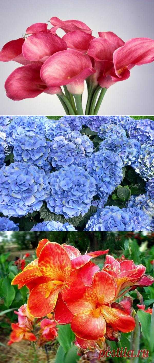 Рейтинг ТОП-10 самых красивейших цветов в мире
