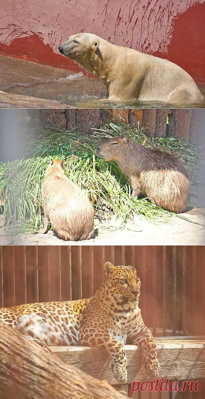 Как животные в пермском зоопарке спасаются от жары