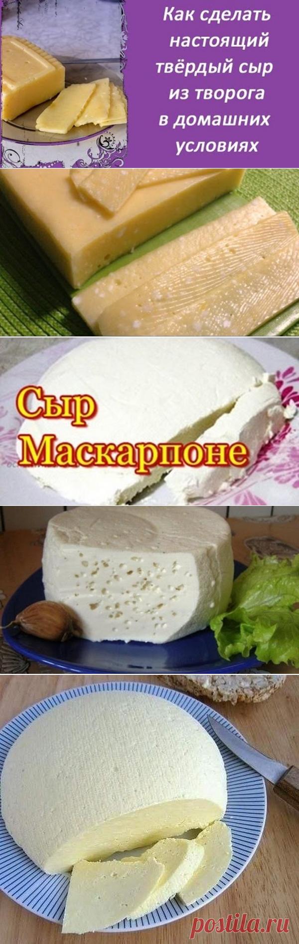 Сделать сыр в домашних условиях из молока козьего