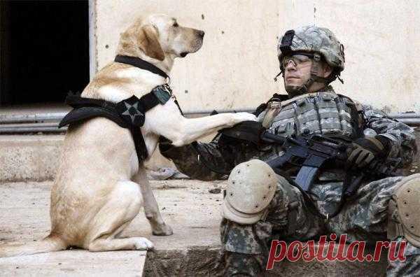 Верный боевой товарищ и друг