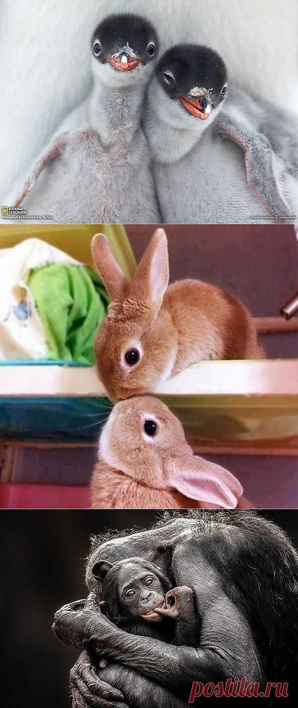 Фотографии животных, которые вы просто обязаны увидеть | Всё самое лучшее из интернета