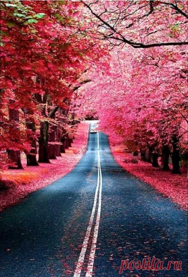 Вот такую прекрасную осень можно увидеть в Мадриде, Испания