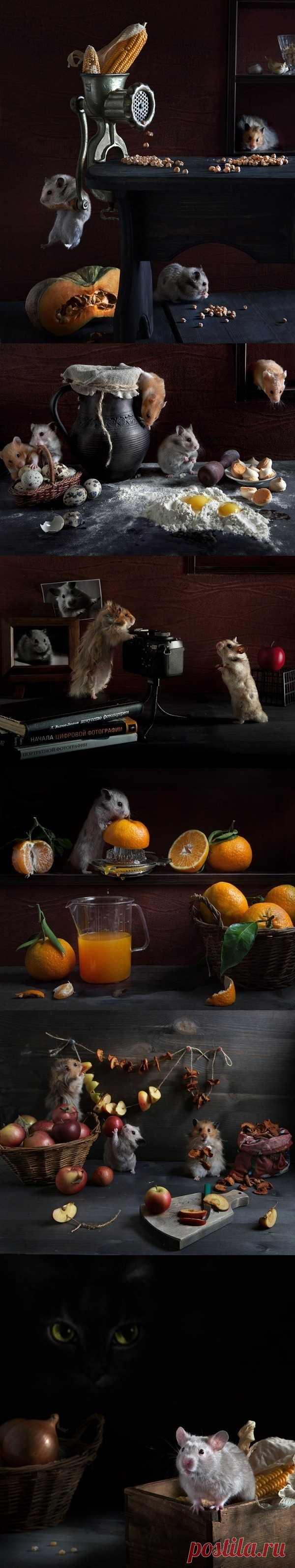 Креативная фотосессия «Тайная жизнь хомяков»