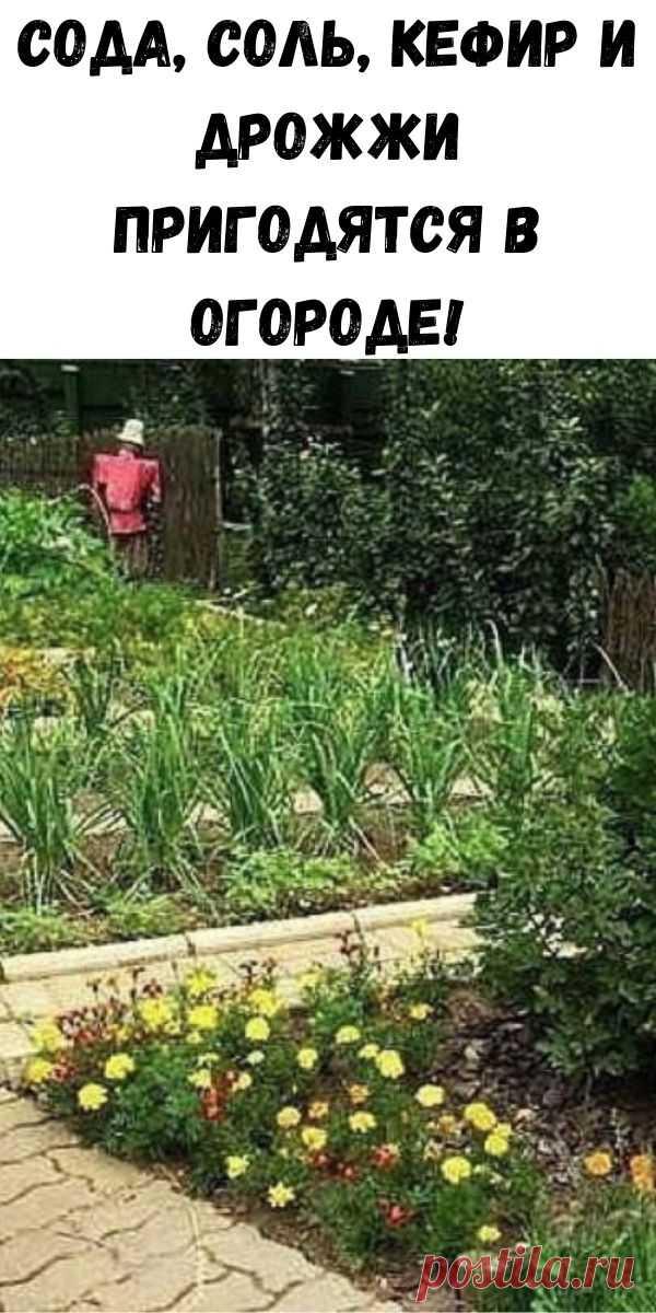 Сода, соль, кефир и дрожжи пригодятся в огороде! - Счастливые заметки