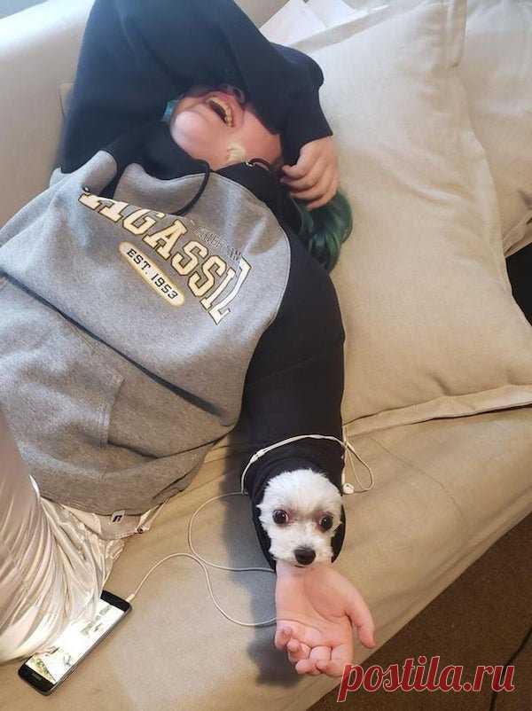 «Ошибка 404»: 10+ фото уморительных собак, которые ненадолго вышли изстроя. Ридус