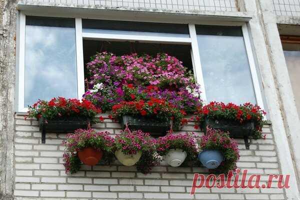 Кладбище непонятных вещей, гниющих на балконе у соседа | Гуд ворк 🛠 | Яндекс Дзен
