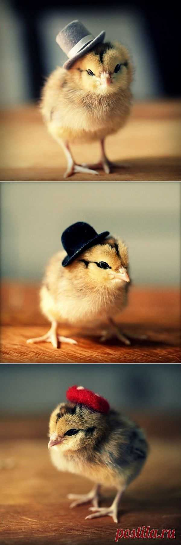 Нарядные цыплятки!