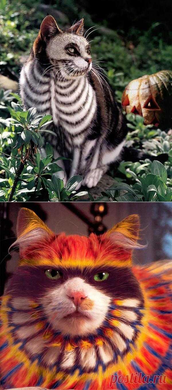 Зачем раскрашивать кота - Художники и арт-проекты