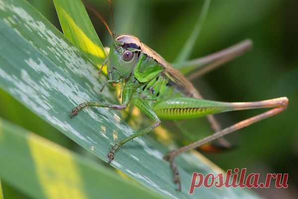 Grasshopper  Free Stock Photo HD - Public Domain Pictures