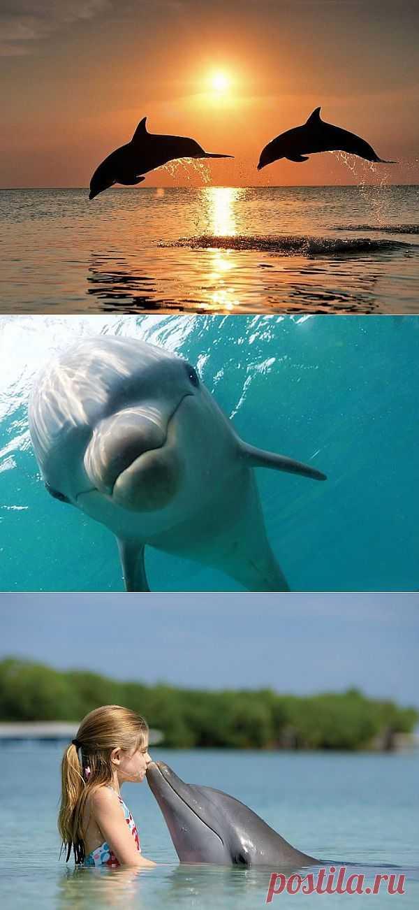 (+1) - Удивительные факты об удивительных дельфинах | НАУКА И ЖИЗНЬ