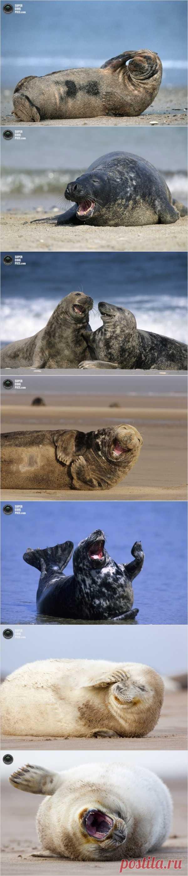 Супер-позитивные тюлени