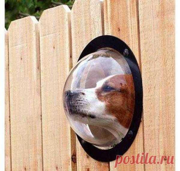 для любопытной собаки