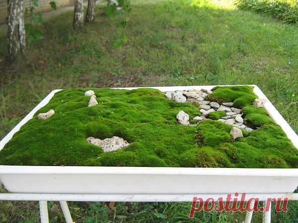 Как сделать мини сад в Японском стиле своими руками