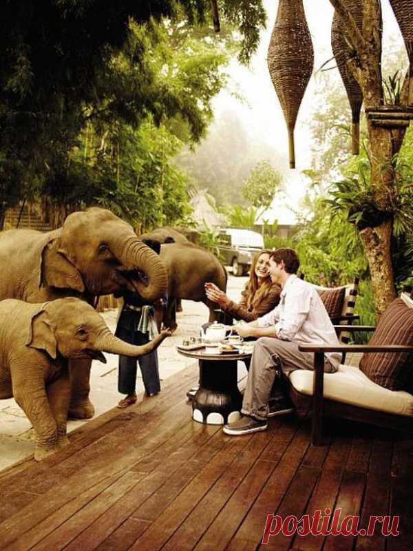Так! Что у нас сегодня на завтрак? Слоны тут как тут. Такой он, Тайланд!