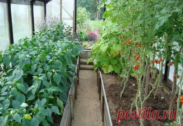 Растения, которые можно и нельзя сажать с помидорами