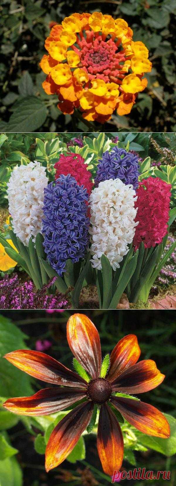 ТОП-10 самых красивейших цветов в мире