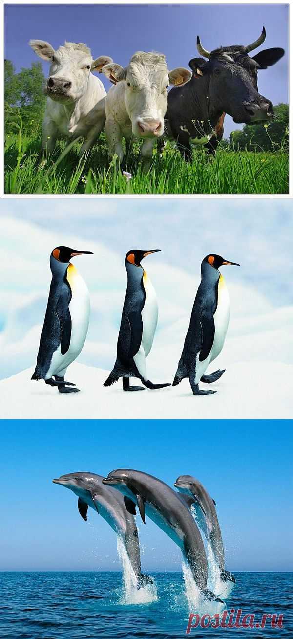 Великолепное трио из животного мира