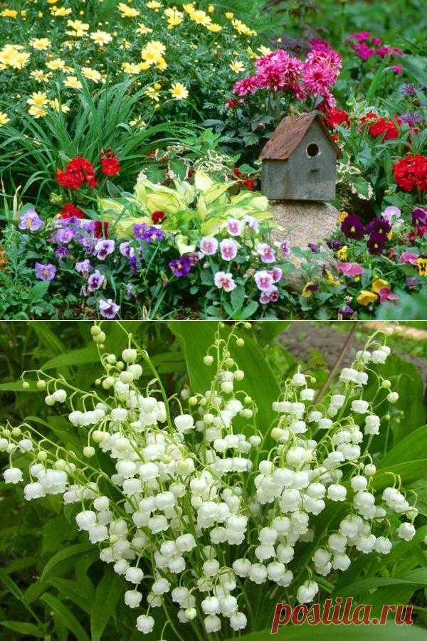 Цветы для сада+схемы цветников.. Цветы для сада+схемы красивых цветников.