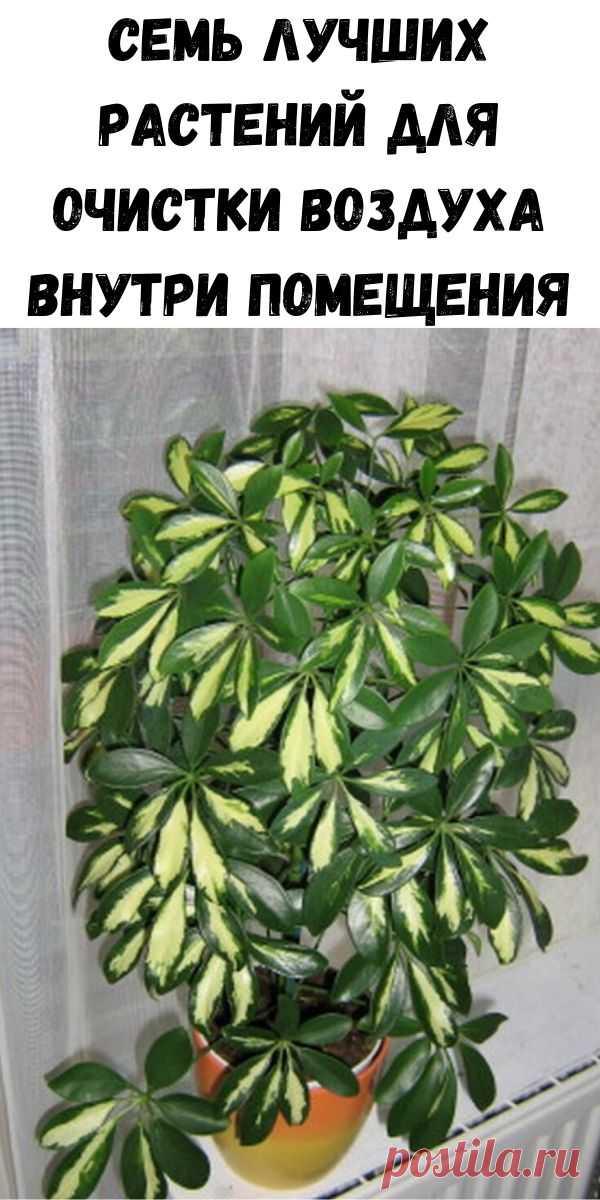 Семь лучших растений для очистки воздуха внутри помещения - Полезные советы красоты