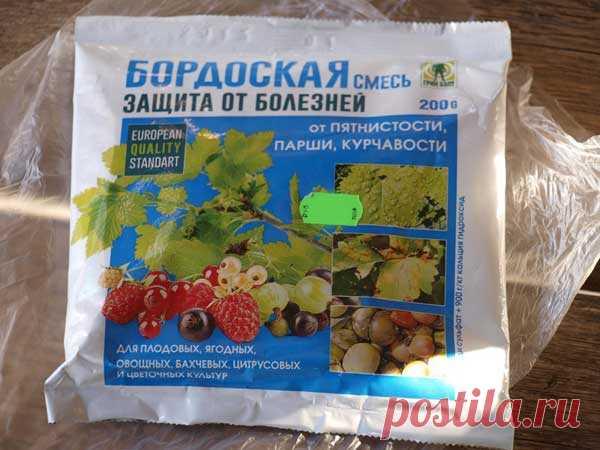 Описание и эффективные методы лечения бурой пятнистости на помидорах