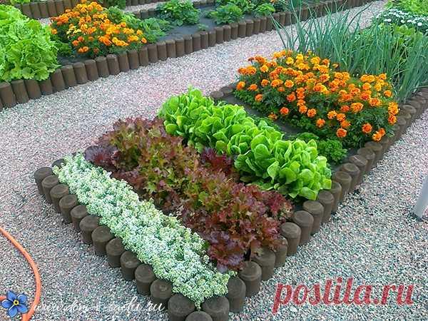 Como es magníficamente posible criar las hierbas sazonadas sobre la huerta. | la Casa hermosa y el Jardín