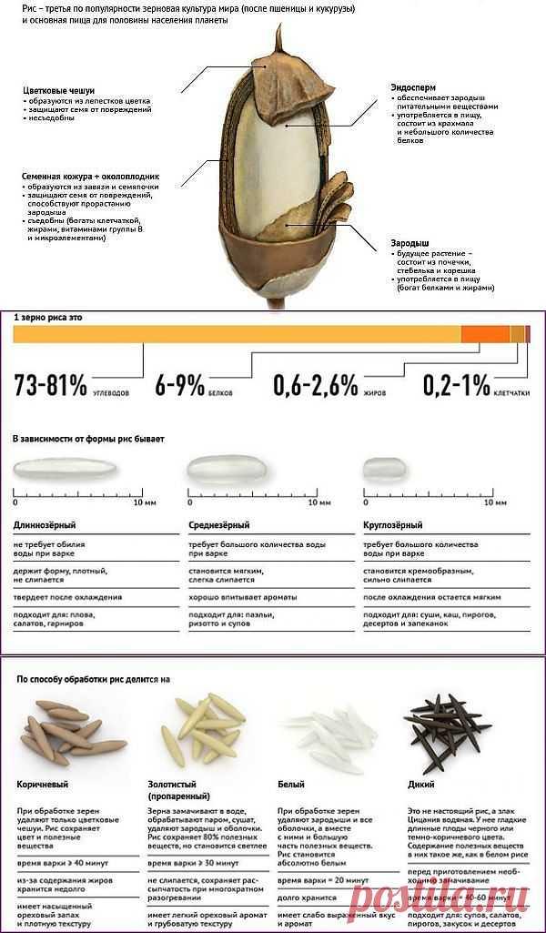 Виды риса и его использование