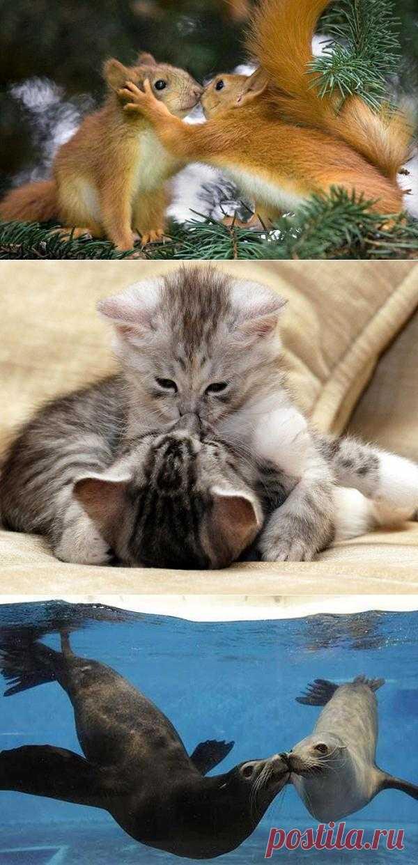 Поцелуйчики у животных! Спасибо за ваши ♥♥♥!